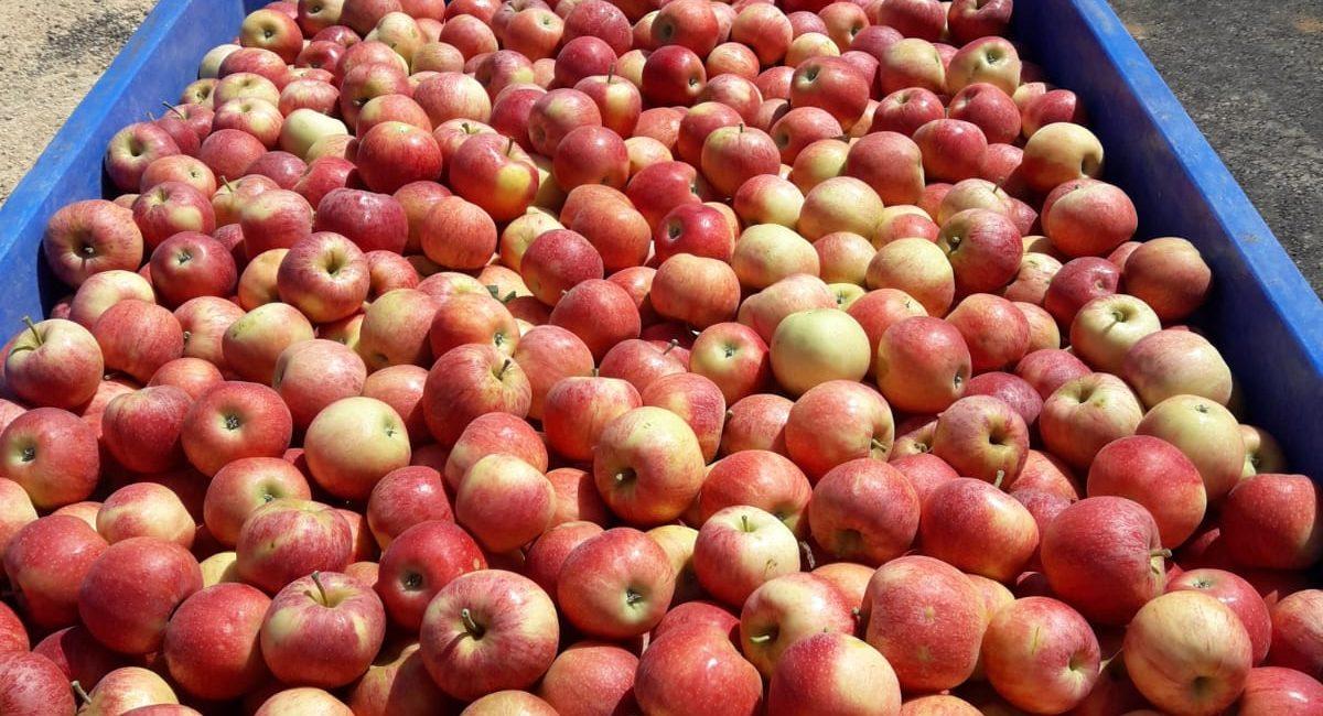 קח פרי ותהיה בריא